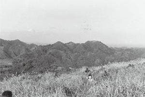 大楠山のカヤ場