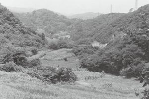 平作の棚田