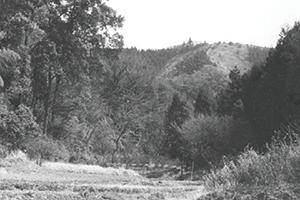 谷戸田の上は山の生産の場