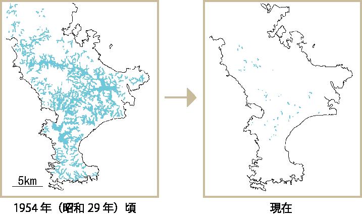 三浦半島のたんぼの遷移