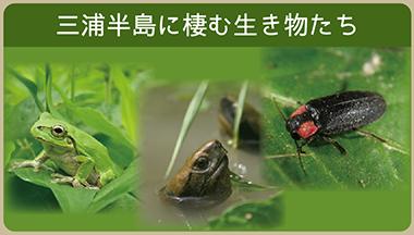 三浦半島に棲む生き物たち