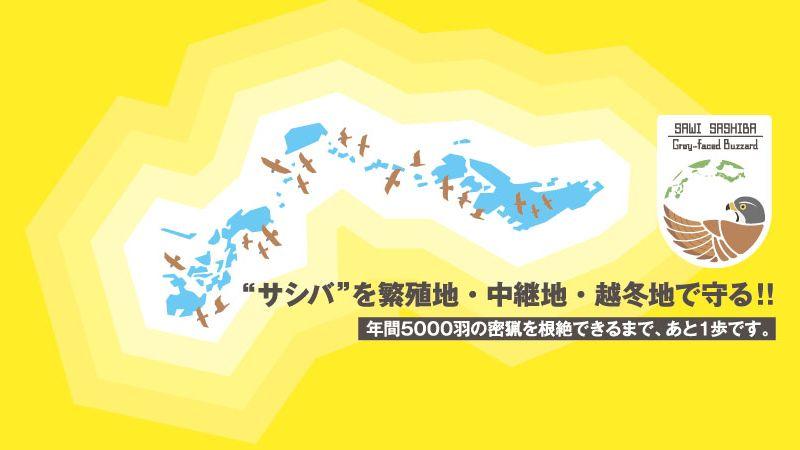 """""""サシバ""""を繁殖地・中継地・越冬地で守る 年間5000羽の密猟を根絶できるまで、あと一歩"""