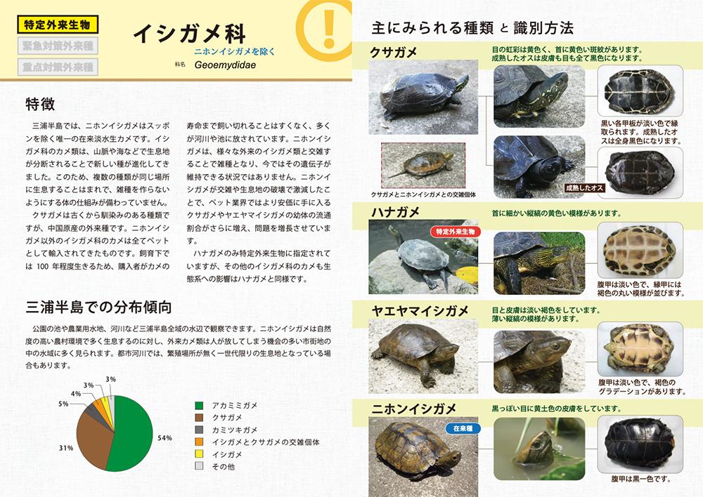 4. イシガメ
